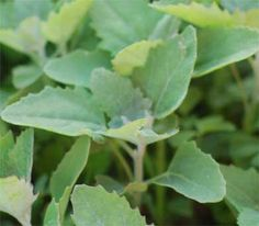 Understanding Your Soil with Weed Indicators — The Morris Tribe
