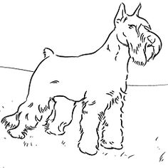 Schnauzer Coloring Page (and many more dog coloring pages for the dog lover who loves to color) Farm Animal Coloring Pages, Dog Coloring Page, Online Coloring Pages, Adult Coloring Pages, Coloring Books, Coloring Stuff, Colouring Sheets, Schnauzers, Dog Template