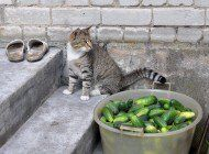 """I've been approached by several people about the """"cats and cucumbers"""" craze. People think this is funny. I saw the videos, they're not funny, they're cruel. Cats And Cucumbers, Cat Health, Thinking Of You, Pets, Funny, Animals, Nyc, Wellness, Times"""