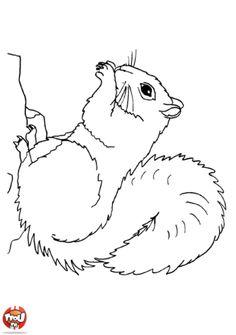 Dessin d 39 cureuil 149 cliquez pour imprimer cureuils pinterest cureuil coloriage - Coloriage d ecureuil ...