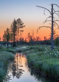 🇫🇮 Sunrise in the woods (Finland) by Asko Kuittinen 🌅 Nature Pictures, Cool Pictures, Beautiful Pictures, Finland Summer, Landscape Photography, Nature Photography, Lappland, Outdoor Landscaping, Outdoor Life