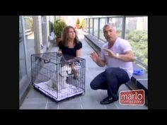 [Watch Video] Crate Training Cesar Milan Dog Whisper