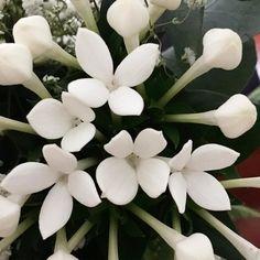 Fiori d'artificio #fuochidartificio #fiori #flowers #white