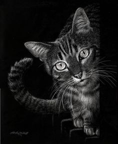 "Curious by Heather A. Mitchell Scratchboard ~ 14"" x 11"""