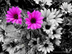 immagini bianco nere con particolare a colori - Cerca con Google