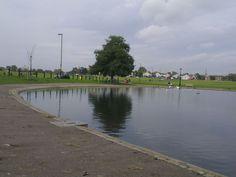 Pond by the Heath 3