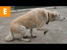 Si ves a tu perro hacer esto, es algo MUY IMPORTANTE - YouTube