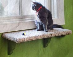 ¿Aún no has gatificado una ventana para tu gato? ¿A qué estás esperando? Inspírate y construye la tuya propia.