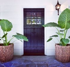Plants and dark doors