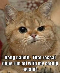 Dang nabbit. That rascal done run off with my catnip again! http://chzb.gr/1TdCKuI