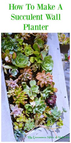 how to make a succulent wall planter                                                                                                                                                      More