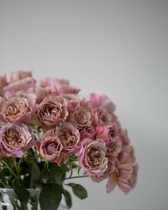 Have you seen this beautiful variety of spray rose before? It's called Loli and it's a new Japanese bred Wabara rose available to order from @zestflowerslondon at @marketflowers via @parfum_flower_company. | #underthefloralspell #rosesofinstagram