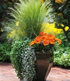 Ornamental+Grass,+Dichondra+and+Gazania.jpg 236×275 pixels