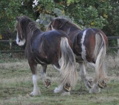 #horses CLYDESDALE                                                                                                                                                     Plus