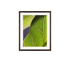 "Sunny Framed Print by Alicia Bock, 16 x 20"", Wood Gallery Frame, Espresso, Mat"