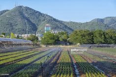There is a large section of farm land within the city of Izmir in Balcova district and different kind of vegetables and flowers are grown here.Seen here is a field of rocket plant with agriculturak sprinklers and Balcova hills at the background.