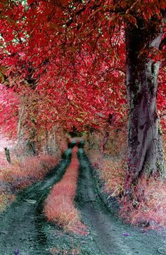 Autumn. Photography Anne Costello-i like the colour contrast used in this photograph