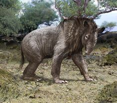 Homalodotherium is an extinct genus of the order Notoungulata, an extinct group of hoofed mammals native to South America. Homalodotherium was about 2 metres (6.6 ft) in body length with a 41 cm skull