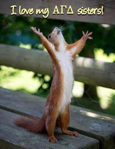 #alphagam #agd #alphagammadelta #squirrel