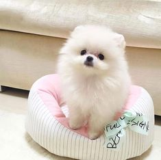 23 Perfect Dog Photos That Can Melt Anyones Heart - Cure Tutorial and Ideas Cute Baby Dogs, Cute Little Puppies, Cute Dogs And Puppies, Baby Puppies, Cute Little Animals, Cute Funny Animals, Doggies, Teacup Puppies, Cute Pets