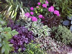 A shady planting bed in RMSer paint-me-green's yard includes pleasing accents of purple and pink.- Beautiful Summer Gardens on HGTV