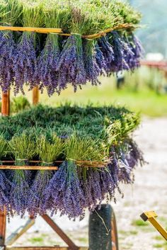 Intoxicating...What Is It About French Lavender? See More at thefrenchinspiredroom.com