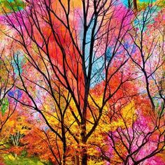 """ELECTRIC NATURE PANEL C6182-ELECTRIC Large Scale Electric Forestfrom Timeless Treasures23"""" Panel of Trees in vibrant spring colors of pink, red, orange, yellow, green, blue, and purple.Seasons"""