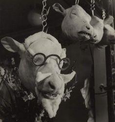 Roger SCHALL (1904-1995)  Tête de veau, c. 1950 Tirage argentique dexposition dépoque, signature sur la Marie-Louise dorigine 31 x 30 cm à vue, dans un cadre