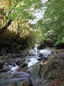 夏は涼しく秋は紅葉も楽しめそうな清流沿いの小径