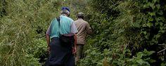 gorillahike,Gorilla trekking Rwanda, gorilla tracking tours, gorilla safari tours, visit Rwanda gorillas