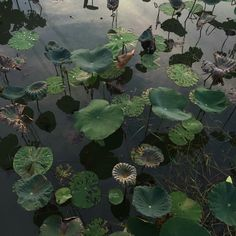 mysterious nature life on earth lily lily pads lillypads deep green water pond lillies wild natural pretty aesthetic idea ideas inspiration nature photo. Dark Green Aesthetic, Nature Aesthetic, Aesthetic Photo, Aesthetic Pictures, Aesthetic Plants, Witch Aesthetic, Aesthetic Girl, Illustration Blume, Slytherin Aesthetic