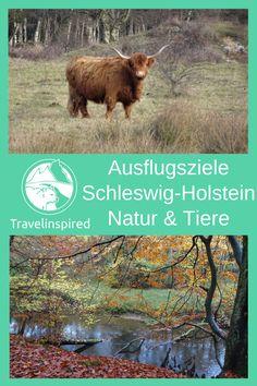 Schleswig-Holstein hat unzählige Ausflugsziele und schöne Orte zu bieten. Wir lieben die abwechslungsreiche Landschaft aus Feldern, Wäldern, Wiesen und Mooren. Nicht zu vergessen die Nordsee mit dem faszinierenden Wattenmeer und die Ostsee mit den beeindruckenden Steilküsten und schönen Stränden. Dazu kommen die Nordfriesischen Inseln mit Dünen und Traumstränden, die Halligen mit ihren Warften und Deutschlands Hochseeinsel Helgoland.