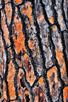 Photo Texture, Wood Texture, Natural Forms, Natural Texture, Nature Tree, Tree Bark, Photo Tree, Land Art, Botanical Art