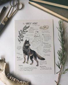 "9,128 Likes, 55 Comments - Lily Seika Jones (@rivuletpaper) on Instagram: """"The Grey Wolf"" L. Canis lupus  Follow link in profile for more journal page prints """