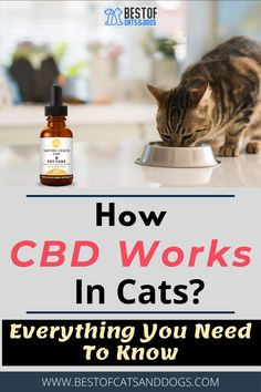 Uses Of Cannabidiol In Cats-(CBD) Oil Has Been Known For Its Ability To Help Animals As A Natural Treatment For Their Health Issues. CBD Can Potentially Treat Several Different Health Issues Including The Following: Anxiety, Infections, Inflammation, Joint Pain, Allergies, And...Read More Here! #CBDoil #Cannabidiol #CBDoilTips #CatCare #CatLove #CatOwnerTips Funny Cute Cats, Silly Cats, Cute Cat Gif, Cat Care Tips, Pet Care, Best Cat Gifs, Cat Health Care, Natural Pain Relief, Healthy Pets