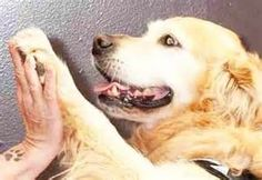 contatto terapeutico anziani disabili - Risultati Yahoo Italia della ricerca di immagini