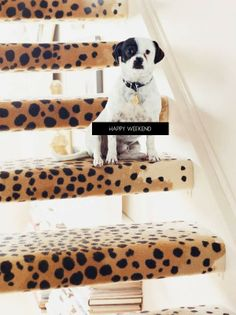 I may need leopard stairs.
