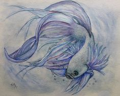 Betta siamese fighting fish painting by kelly mills Watercolor Art Landscape, Watercolor Art Diy, Watercolor Artists, Animal Paintings, Animal Drawings, Fish Paintings, Art Drawings, Betta Fish Tattoo, Fish Tattoos