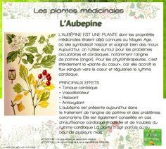Les plantes médicinales : L'Aubépine