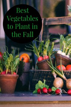 best-vegetables-to-plant-in-the-fall