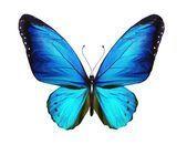 Borboleta azul, isolada no branco — Imagem de Stock #12105090