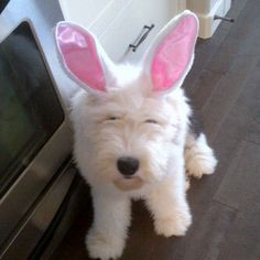 The Best Twitter Pet Pics - Anderson Cooper Photo Gallery