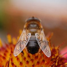 Please take action now and tell the EPA it needs to do its job and protect bees, the planet and all of us from pollinator-killing pesticides.