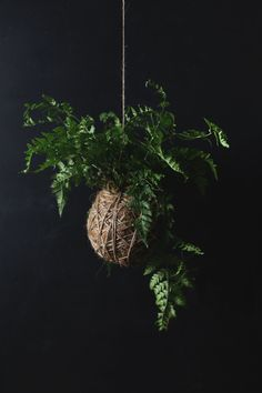 kokedama - Japanese for 'moss ball' and involves creating a ball of soil around a plant's roots and wrapping it in moss and twine to hang