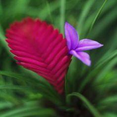 tropical rainforest plants - Google Search
