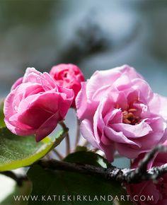 """Springtime Pink"" Art Print - Katie Kirkland Fine Art - Click through for full…"