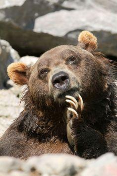 Thinking bear. :) #SicEm