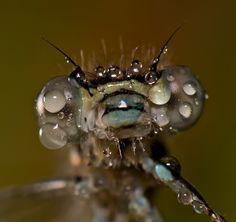 Interesante imagen la que nos envia Xavier Gutierrez. Nunca hemos visto una mosca tan de cerca. Si te gusta dale tu voto