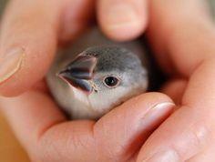 {baby sparrow} Japan
