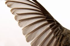 junco wing - photography by Mary Jo Hoffman at Still blog